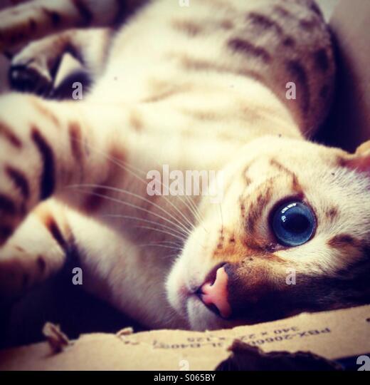 Eye Eye. - Stock Image