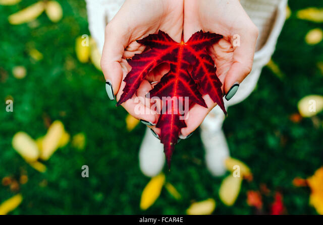 Autumn leaves in girl hands - Stock-Bilder