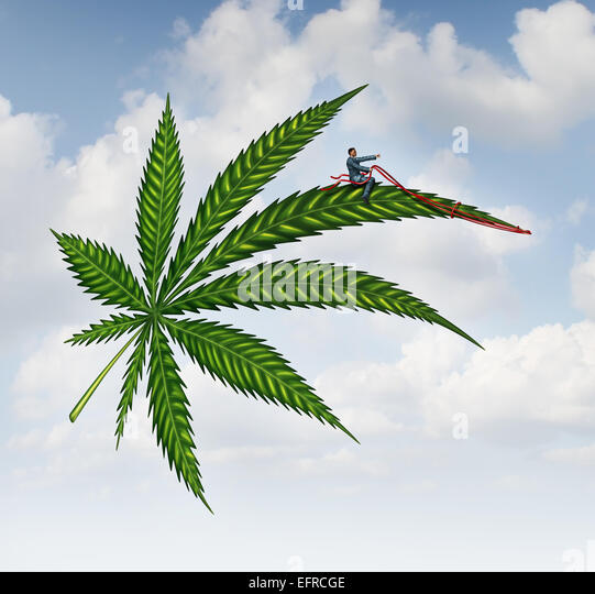 Marijuana concept and cannabis leaf flying high with a person guiding the medicinal plant as a symbol for the social - Stock Image
