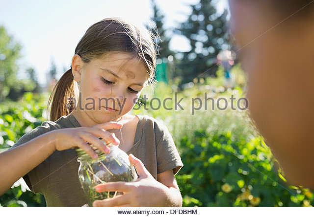 Little girl catching bugs in community garden with jar - Stock Image