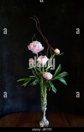 Peonies in an elegant arrangement within a pewter vase with a shell motif & a dark textured background - Stock Image
