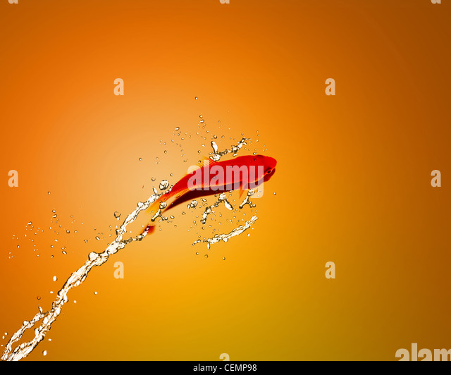 Golden fish jumping out of water, Good Concept for bad luck, unlucky, risks concept. - Stock-Bilder