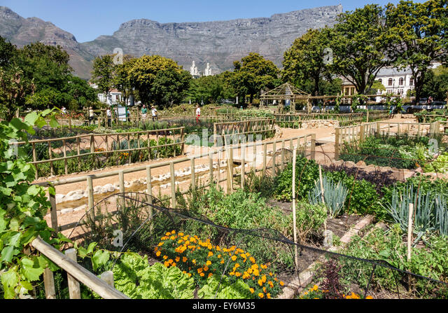 Cape Town South Africa African City Centre center Government Avenue The Company's Garden public park Table Mountain - Stock Image