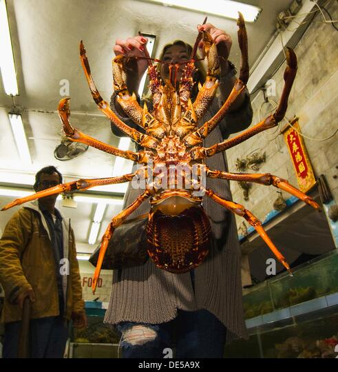 A European tourist holding a gigantic lobster. - Stock Image