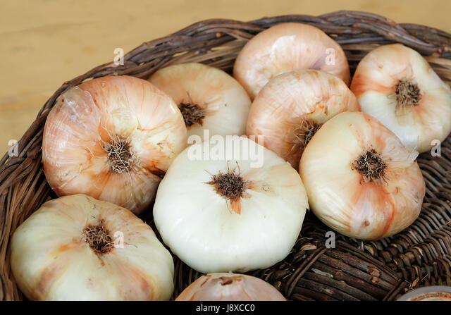 The white onion of Fara Filiorum Petri from Abruzzo, Italy,Europe. - Stock Image