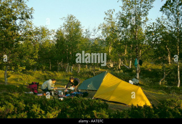 Camping in a birch wood near the Kisuris hut, Sarek National Park, Lappland, Norrbottens Län, arctic Sweden. - Stock Image
