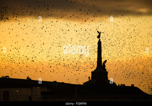 Aberystwyth, Wales, UK, 05 November 2015.   In the run-up to Remembrance Sunday, a flock of starlings flies around - Stock Image