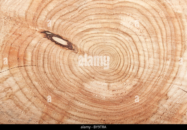 Top view Close-up of cut tree stump - Stock Image