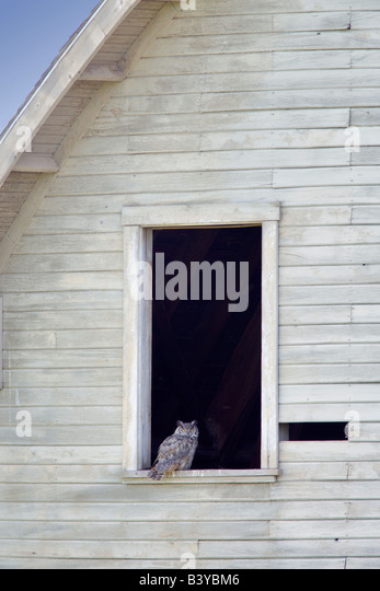 Great horned owl in window of barn. The Palouse, Washington - Stock-Bilder