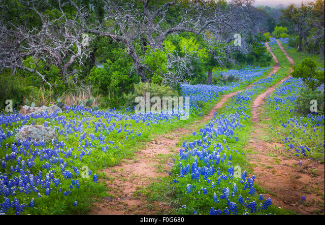 Old road and bluebonnets in the Texas Hill Country - Stock-Bilder