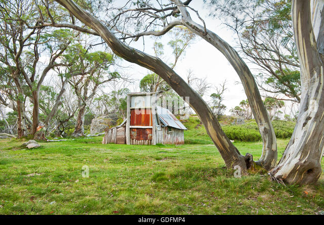 ?the snow-gum essay I have looked on google and i cannot find the full poem of the snow gum  poem of the snow gum by douglas stewart  a 400 word essay or short poem.