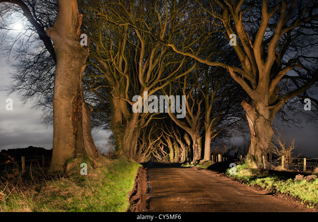 Dark hedges at night, full moon to left - Stock-Bilder