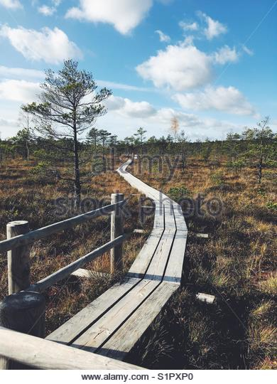 The path to peace. @ Kemeri National Park, Latvia, Northern Europe - Stock Image