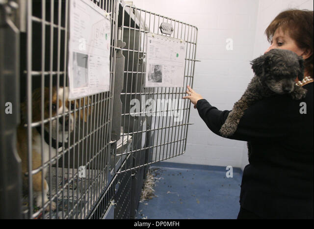 Mar 27, 2006; Palm Beach, FL, USA; Palm Beach County animal care and control division director, Dianne Sauve, checks - Stock Image