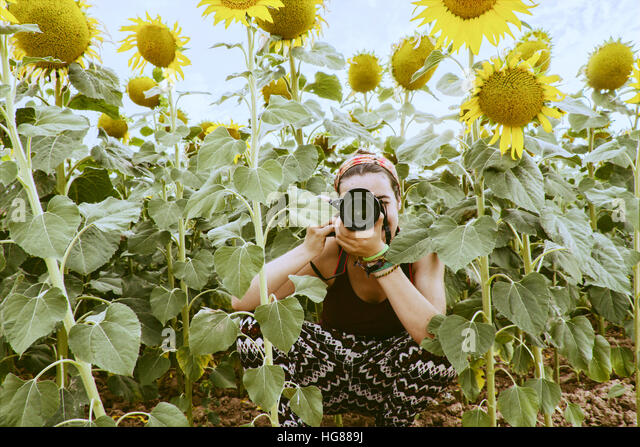 Young woman taking photographies in a field of sunflowers - Stock Image