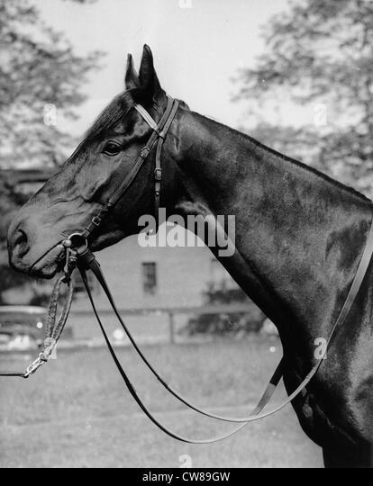 Kelso, Hialeah Racetrack, ca 1960 - Stock Image