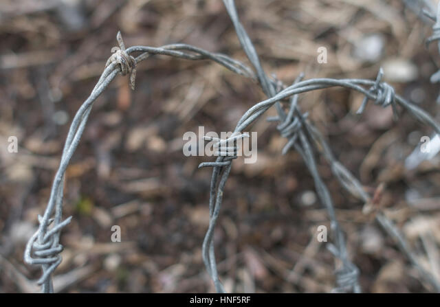 Section of barbed fencing wire - as metaphor for agriculture and also constraint, and similar. - Stock Image