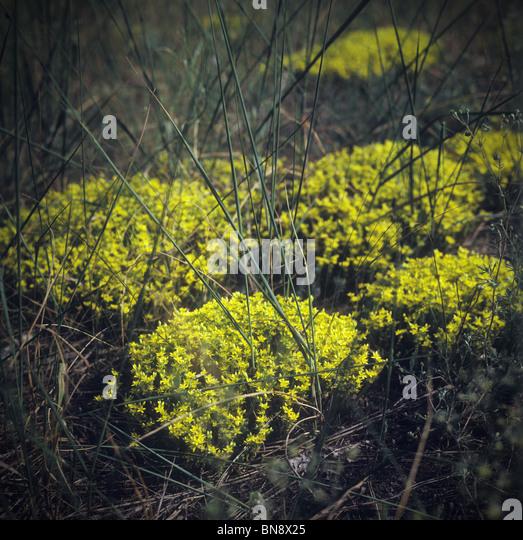 Moss. - Stock-Bilder