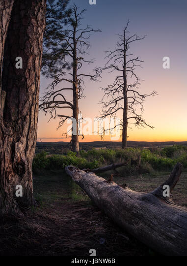 Scenic landscape with fallen tree trunk at peaceful evening - Stock Image