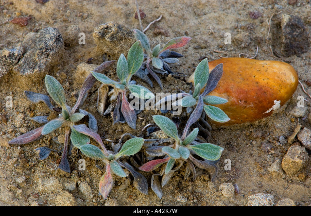 Forbs Stock Photos Amp Forbs Stock Images Alamy