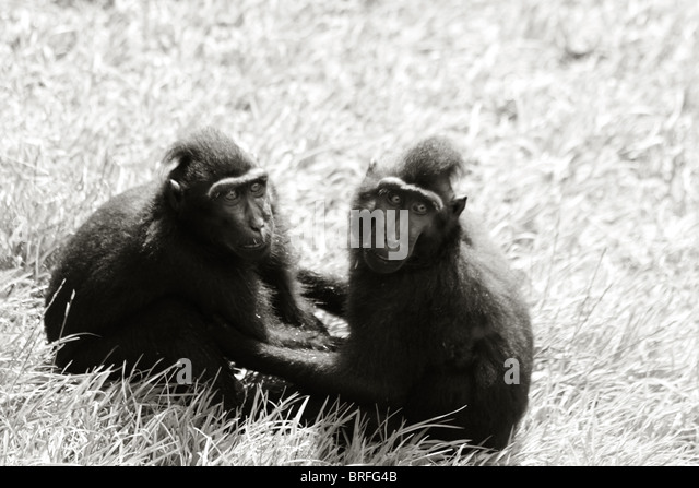 two monkeys holding each other - Stock-Bilder