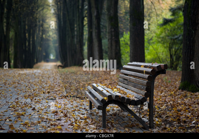 Lonely wooden bench in autumn park under leaves - Stock Image