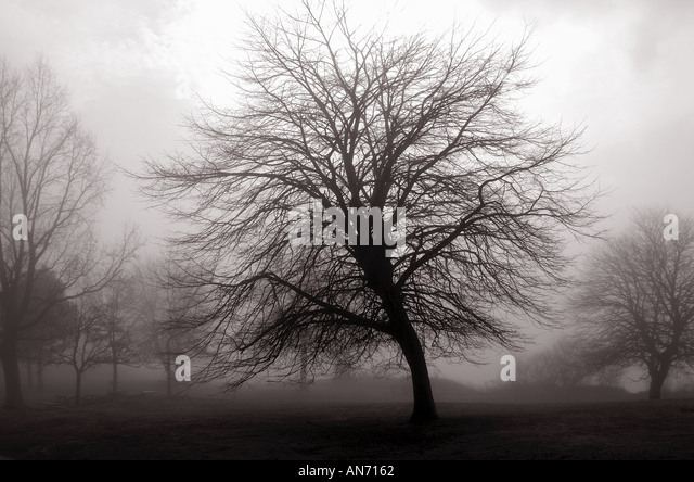 Tree in fog Lighthouse park New Haven Connecticut USA - Stock Image