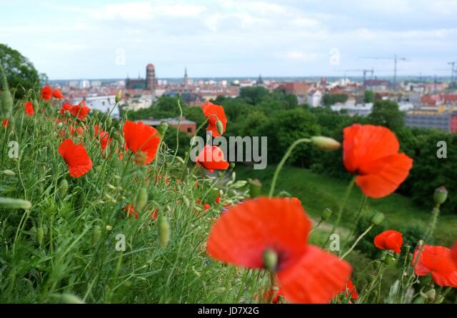 Poppies on the Krzyż Milenijny overlooking Gdansk, Poland, central/eastern Europe. June 2017. - Stock Image