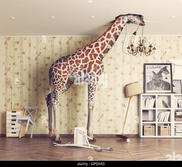 giraffe breaks the ceiling in the living room. Photography combination concept - Stock Image