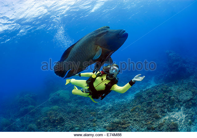 Scuba diving with fish - Stock Image