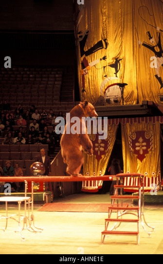 Moscow Russia Moscow Circus Performing Bear - Stock Image