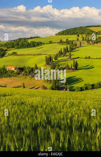 Winding road near Monticchiello with the famous Cypress trees in the heart of the Tuscany, Italy - Stock-Bilder