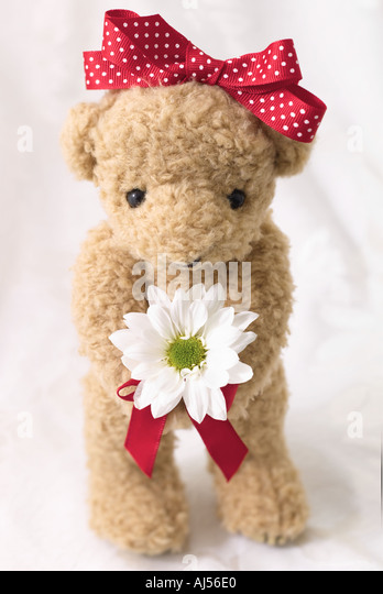 Valentine Bear with Daisy - Stock Image