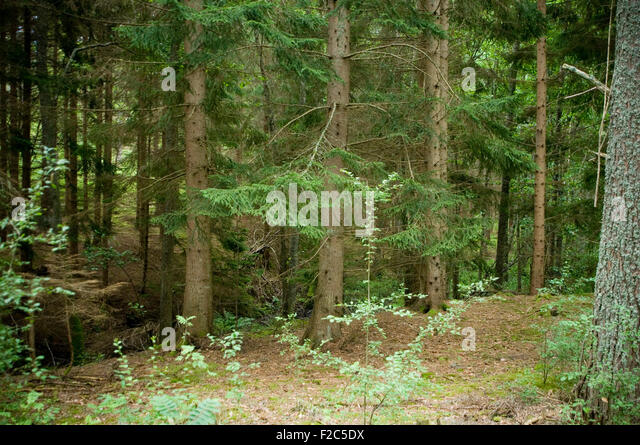 Sustainable forestry stock photos sustainable forestry for Pine tree timber