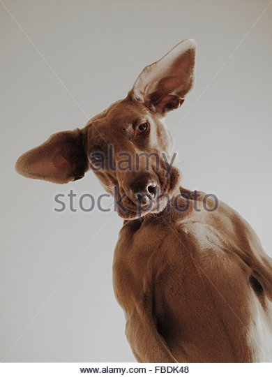 Upward View Of Cute Dog On Grey Background - Stock Image