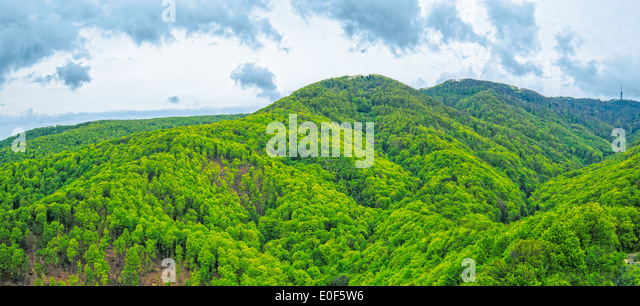 Hills and forests - Stock Image