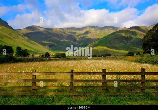 daisy field mountain sky - photo #33