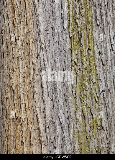 Textured tree bark, background - Stock Image
