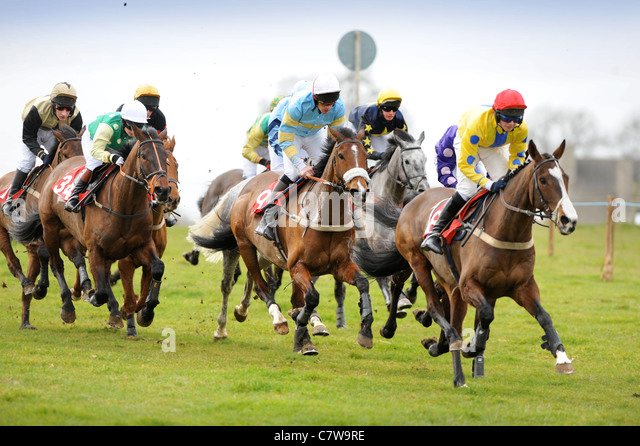 The field enter the home straight at the Duke of Beaufort's Hunt Point-to-Point 2009, Gloucestershire UK - Stock Image