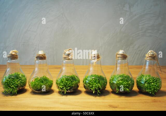 Bulb plants. - Stock Image