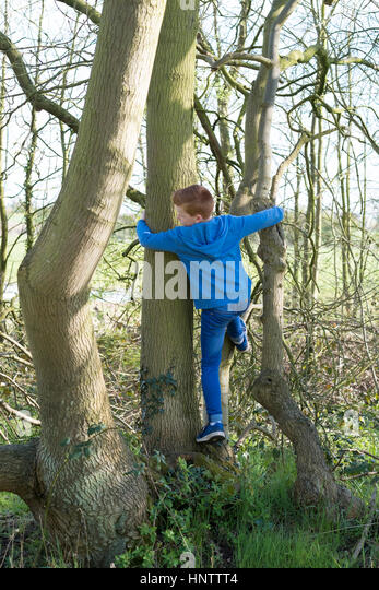 A young teenage boy climbing a tree in the countryside - Stock Image