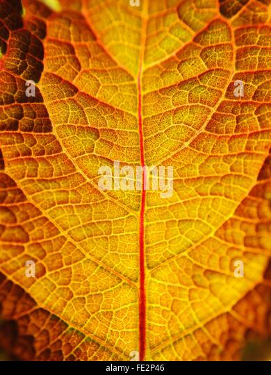 Full Frame Shot Of Dry Leaf - Stock Image