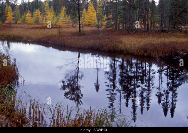 seney mature singles We used landscape met-rics to analyze a chronosequence of aerial imagery to examine these ''stringers'' of mature (nwrs) has emphasized single the seney.