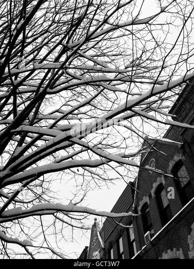 Snow covered branches by urban homes. - Stock Image