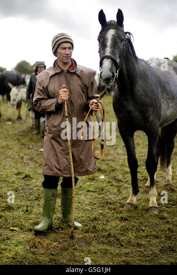 Ballinasloe Horse Fair 2012 - Stock Image