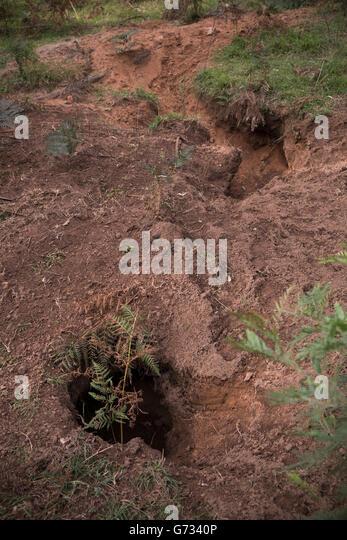 wombats holes - Stock-Bilder