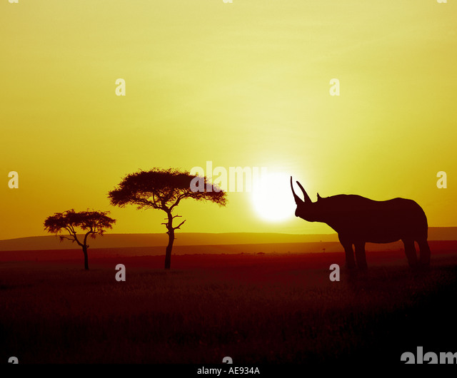 Black rhino, Maasai Mara National Park, Kenya - Stock Image