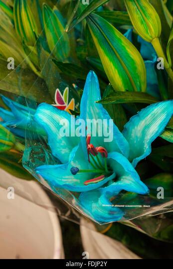 Bogota Paloquemao flowers market - Stock Image