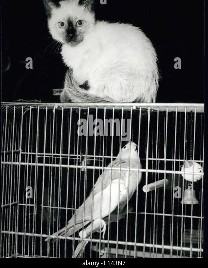 Apr. 04, 2012 - That's a waste . Ruminates this little cat! There one tries to come surreptitiously near to - Stock Image