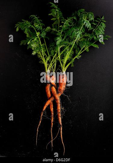 Organic Carrots - Stock Image